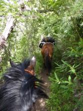 Cania-Wald