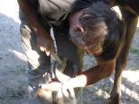 Roland zieht Nägel fest