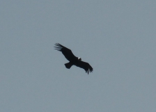 Nur ein Condor und wir