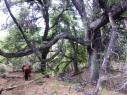 Unglaubliche Bäume